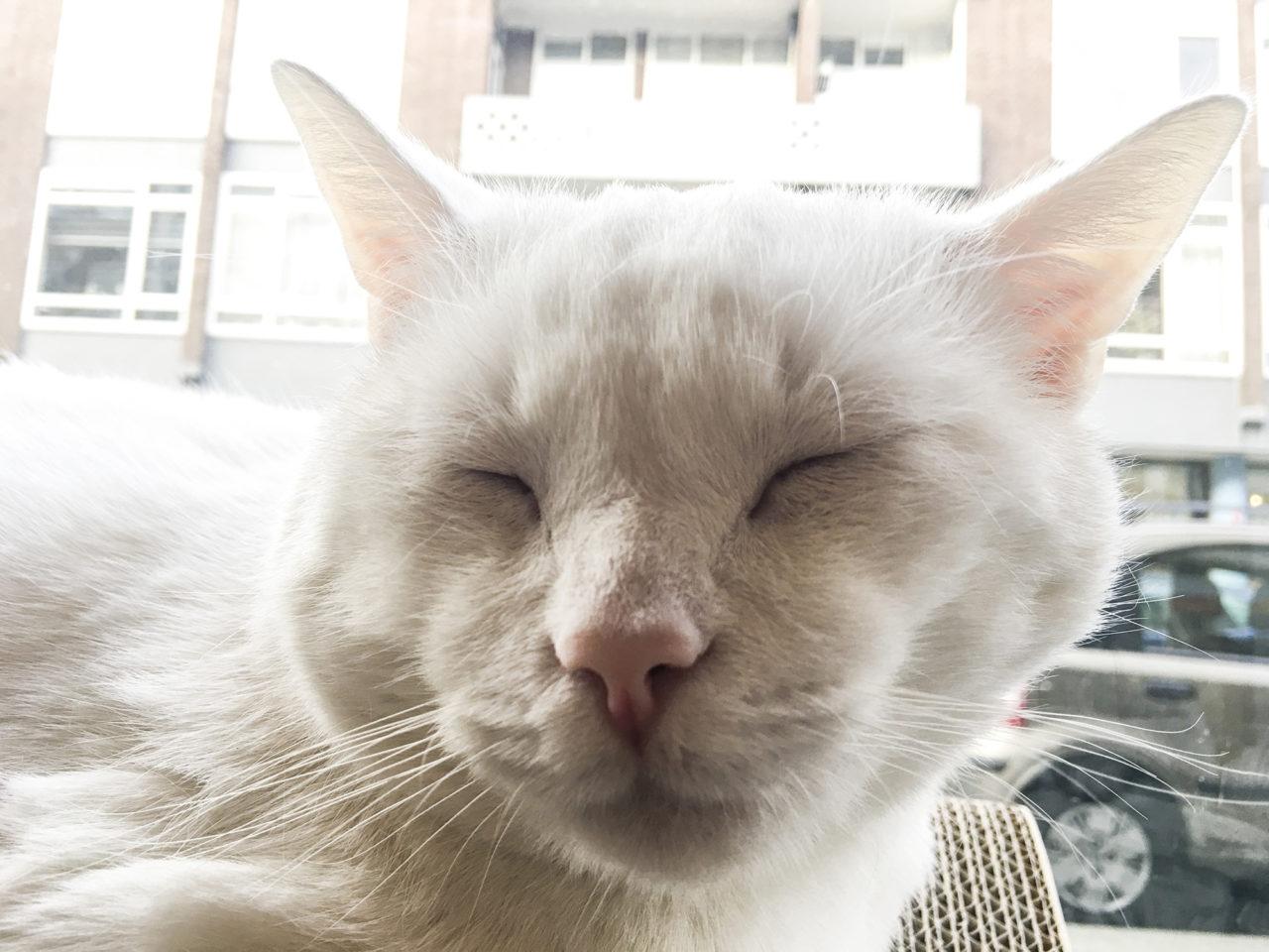 Kattencafe 15
