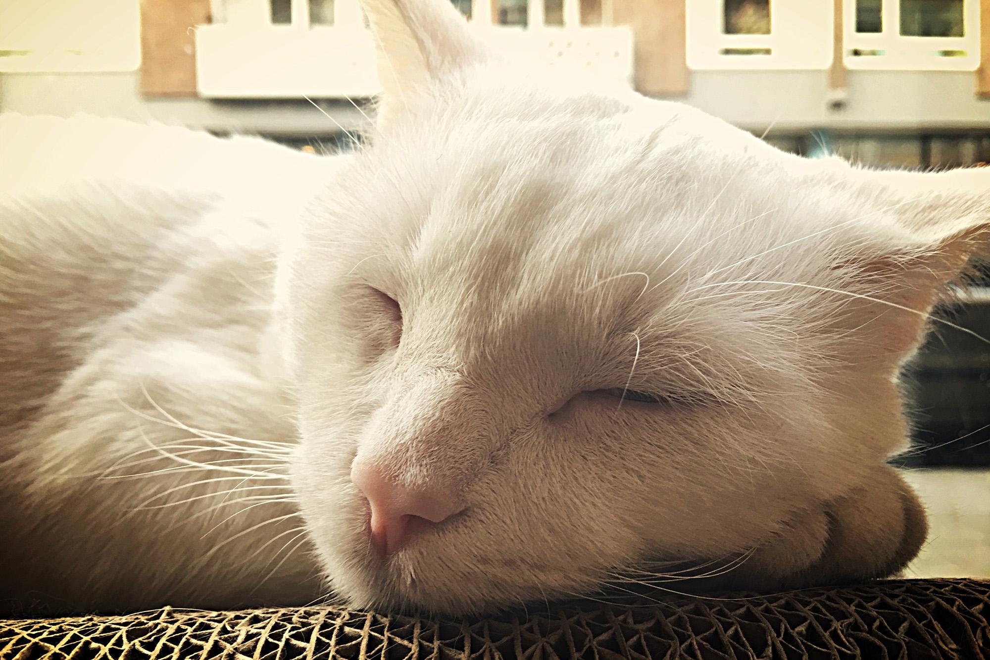 Kattencafe 21