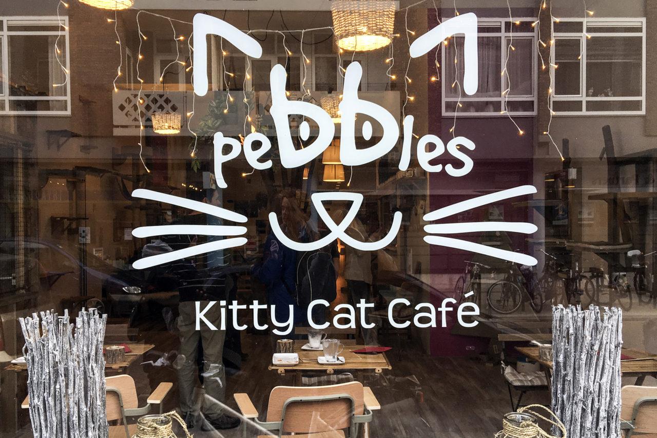 Kattencafe 2