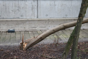stormschade-campus-Woudestein-18-januari-foto-Elmer-14