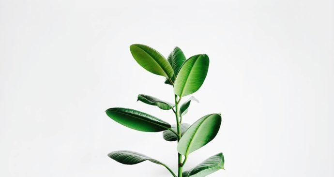 plantje-sustainability-duurzaamheid-hub