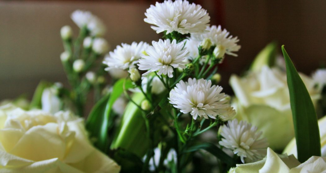 white-crysanthemum1