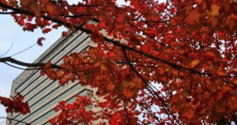 Herfst op de campus / Erasmus Universiteit