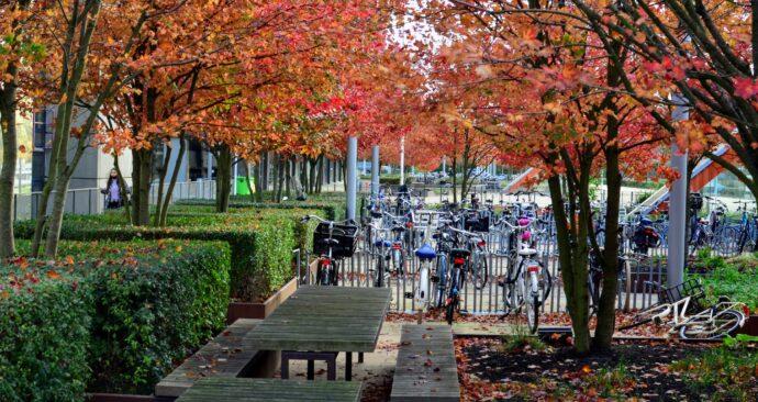 Herfst op de campus / Erasmus Universiteit /fietsen