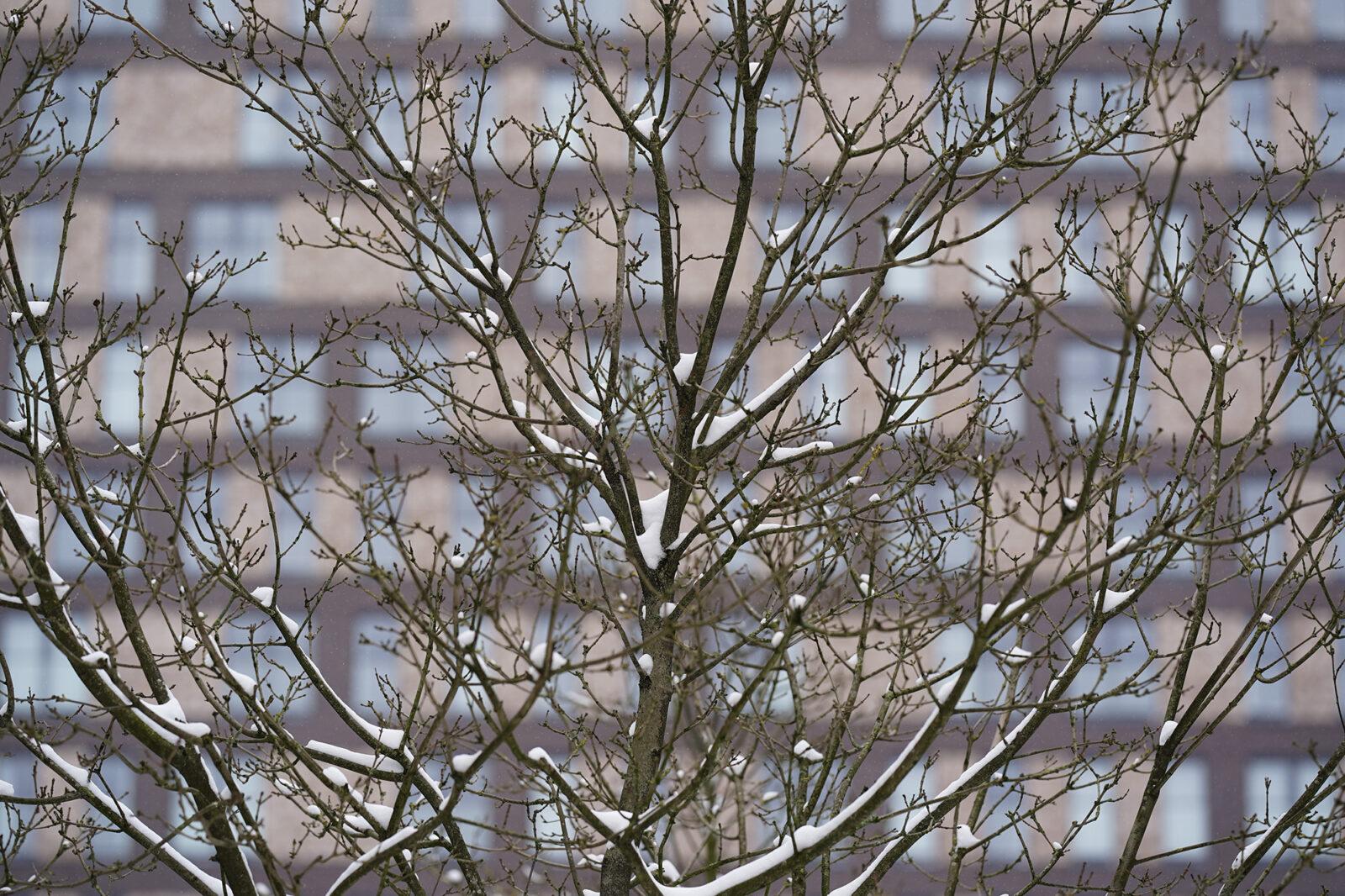 Campus in de sneeuw 08-02-2021 – Hatta – Arie Kers