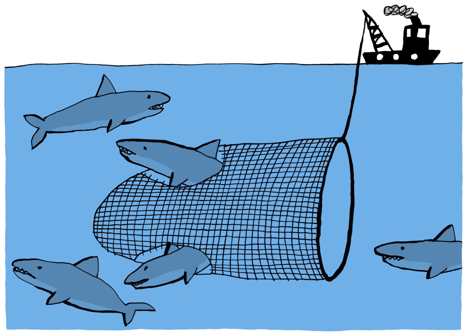 em-mazen in net belastingen haaien