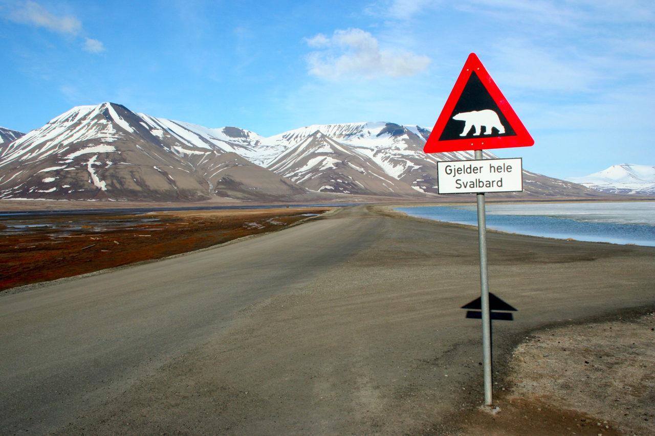 2. klimaatverandering ijsbeer wikipedia sprok