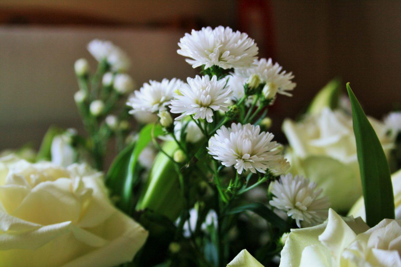 white-crysanthemum