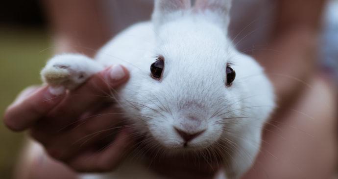 konijn rabbit bunny