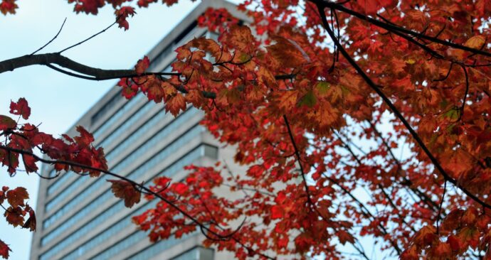 autumn on campus / Erasmus University