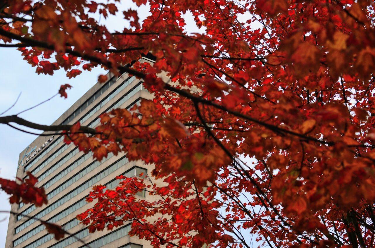 autumn on campus / Erasmus University