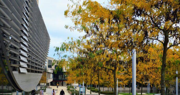 autumn on campus / Erasmus University /