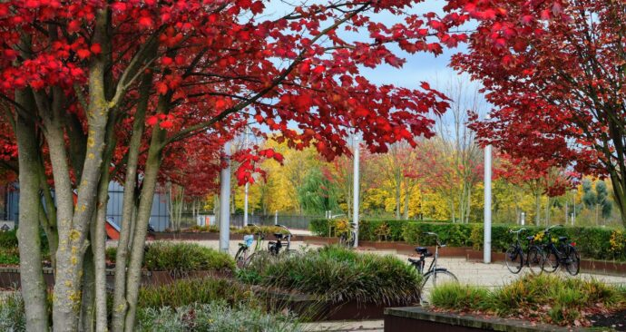 autumn on campus / Erasmus University /